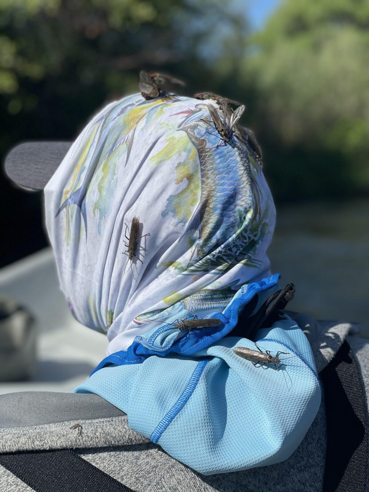 Salmon Fly season